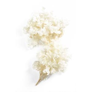 プリザーブドフラワー 花材 カシワバ アジサイ オフホワイト 小分け あじさい 紫陽花 大地農園|solargift