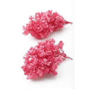 プリザーブドフラワー 材料 花材 カシワバ アジサイ ストロベリー 小分け あじさい 紫陽花 大地農園|solargift