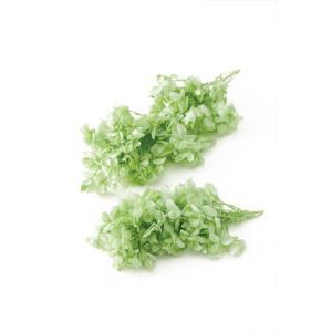プリザーブドフラワー 材料 花材 カシワバ アジサイ クリアグリーン 小分け あじさい 紫陽花 大地農園|solargift