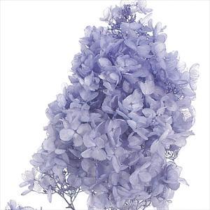 プリザーブドフラワー 花材 ソフトピラミッド アジサイ ラベンダー 小分け 大地農園 紫陽花の画像
