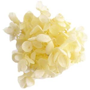プリザーブドフラワー 花材 ソフトピラミッドアジサイ ヘッド モーニングイエロー 小分け 約4g|solargift