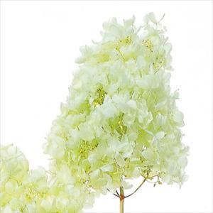 プリザーブドフラワー 花材 ソフトピラミッドアジサイ ヘッド クリアグリーン 小分け 約4g|solargift