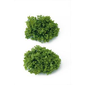 プリザーブドフラワー 花材 ソフトピラミッドアジサイ ヘッド グリーン 小分け 約4g|solargift