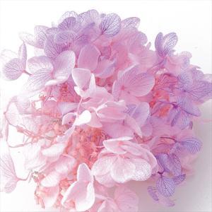 プリザーブドフラワー 花材 ソフトピラミッドアジサイ ヘッド ピンクパープル 小分け 約4g|solargift