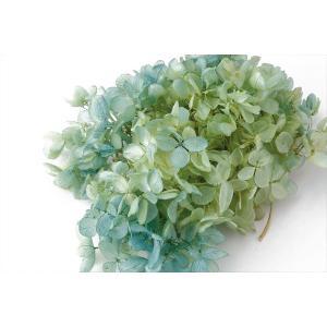 プリザーブドフラワー 花材 ソフトピラミッドアジサイ ヘッド ライムブルー 小分け 約4g|solargift