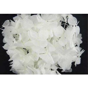 プリザーブドフラワー 花材 ソフトゆめ アジサイ ヘッド オフホワイト 小分け solargift