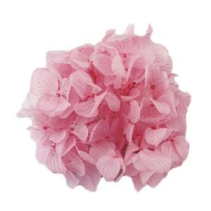 プリザーブドフラワー 花材 ソフトゆめ アジサイ ヘッド ピンク 小分け solargift