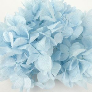 プリザーブドフラワー 花材 ソフトゆめ アジサイ ヘッド ブルー 小分け solargift