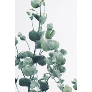 グニーユーカリ ウオッシュホワイト 小分け x1-oh-02290-012 大地農園|solargift