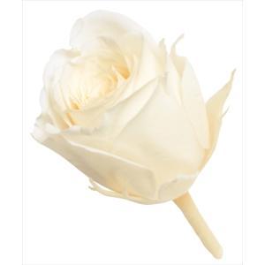 プリザーブドフラワー 花材 ビビアン ローズ アンティックホワイト 小分け 1輪 バラ売り 大地農園 白 バラ ホワイトの画像
