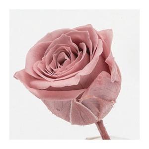 プリザーブドフラワー 花材 ビビアン ローズ モーブピンク 小分け 1輪 バラ売り 大地農園 ピンクの画像