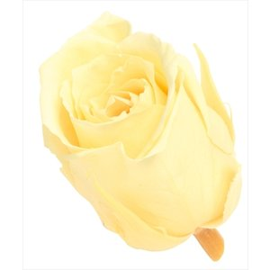 プリザーブドフラワー 花材 ビビアン ローズ モーニングイエロー 小分け 1輪 バラ売り 大地農園 黄色 バラの画像