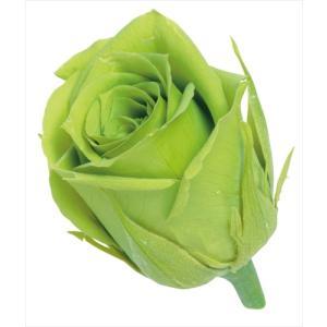 プリザーブドフラワー 花材 ビビアン ローズ ライトグリーン 小分け 1輪 バラ売り 大地農園 緑 バラの画像