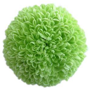 プリザーブドフラワー 花材 ポンポン菊 大 グリーン 1輪 菊|solargift