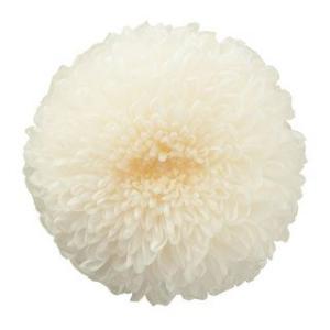 プリザーブドフラワー 花材 菊 ピンポンマム ミディー 白 小分け 1輪 バラ売り|solargift