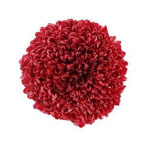 プリザーブドフラワー 花材 菊 ピンポンマム ミディー べにいろ 小分け 1輪 そらプリ|solargift