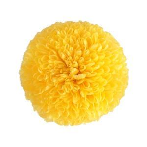 プリザーブドフラワー 菊 ポンポン菊 ミディー イエロー 小分け1輪 そらプリ|solargift