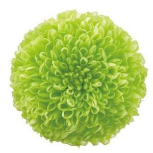 プリザーブドフラワー 花材 菊 ピンポンマム ミディー グリーン 小分け 1輪 バラ売り|solargift