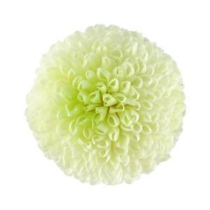 プリザーブドフラワー 花材 菊 ピンポンマム ミディー ホワイトグリーン 小分け 1輪 そらプリ solargift