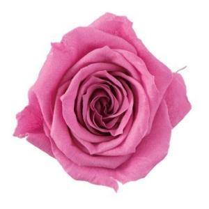 プリザーブドフラワー花材 いずみ ローズ エスプリピンク 小分け 1輪入 大地農園 solargift