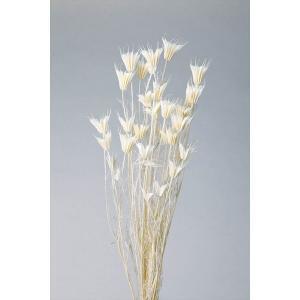 ニゲラオリエンタリス 白 小分け x1-oh-10380-011 大地農園|solargift