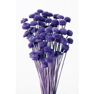 ボタンフラワー グレープ 小分け 約1/3〜1/4袋 花材 プリザーブドフラワー ハーバリウム 材料 大地農園|solargift