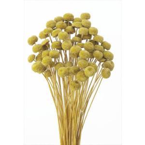 ボタンフラワー マスタード 小分け 約1/3〜1/4袋 花材 プリザーブドフラワー ハーバリウム 材料 大地農園|solargift