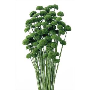 「即納」 ボタンフラワー「モデレートグリーン 小分け 約1/3〜1/4袋」 花材 プリザーブドフラワー ハーバリウム 材料 大地農園