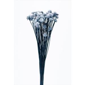 「即納」 ボタンフラワー「ニュアンスグレープ 小分け 約1/3〜1/4袋」 花材 プリザーブドフラワー ハーバリウム 材料 大地農園