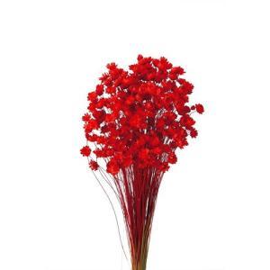 そらプリ ドライフラワー 花材 スターフラワー ブロッサム レッド 小分け|solargift