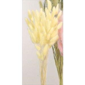 ドライフラワー 花材 ラグラス クリーム 小分け|solargift