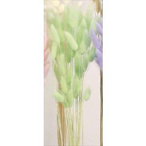 そらプリ ドライフラワー 花材 ラグラス ミントグリーン 小分け|solargift