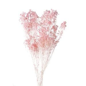 ドライフラワー 花材 モリソニア ピンク 小分け 大地農園|solargift