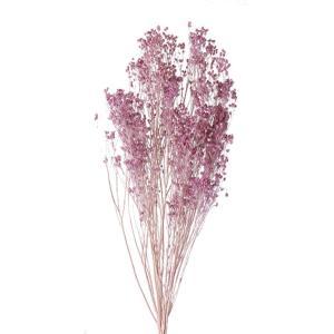 ドライフラワー 花材 モリソニア エンジェルパープル 小分け 大地農園|solargift