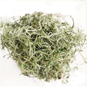 スパニッシュモス グリーン 小分け プリザーブドフラワー 材料 花材 モス 大地農園|solargift