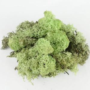 アイスランドモス グリーン 小分け 約15〜20g入 プリザーブドフラワー 材料 花材 モス 大地農園|solargift