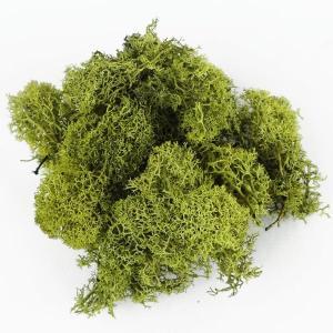 アイスランドモス モスグリーン 小分け 約15〜20g入 大地農園 プリザーブドフラワー 材料 花材|solargift