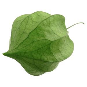 ほおずき グリーン 小分け 1輪入 プリザーブドフラワー 花材 材料|solargift