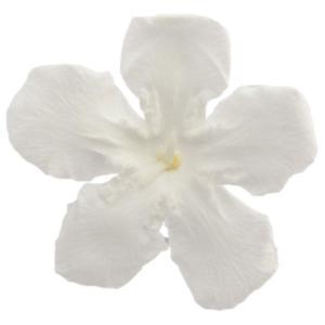 ニオイサクラ ホワイト 小分け 1輪入 プリザーブドフラワー 材料 花材|solargift