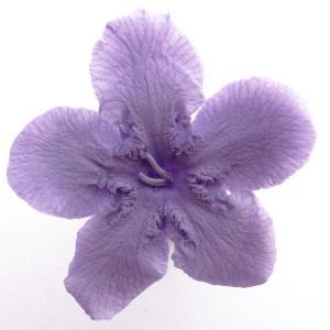 ニオイサクラ バイオレット 小分け 1輪入 プリザーブドフラワー 材料 花材|solargift
