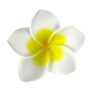 プルメリアSS ナチュラル 小分け 1輪入 プリザーブドフラワー 材料 花材 prehana world|solargift