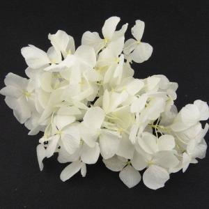 プリザーブドフラワー 材料 花材 HYDRAGEAアジサイ ブライダルホワイト 小分け あじさい 紫陽花 solargift