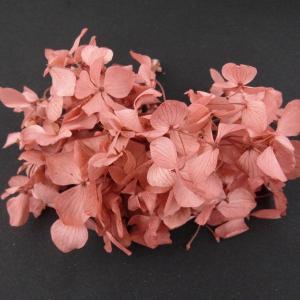 プリザーブドフラワー 材料 花材 HYDRAGEAアジサイ コーラルピンク 小分け あじさい 紫陽花 solargift