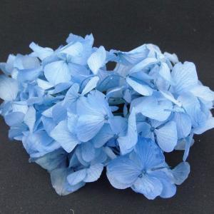 プリザーブドフラワー 材料 花材 HYDRAGEAアジサイ ライトブルー 小分け あじさい 紫陽花 solargift