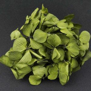プリザーブドフラワー 材料 花材 HYDRAGEAアジサイ オリーブ 小分け あじさい 紫陽花 solargift
