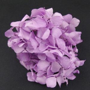 プリザーブドフラワー 花材 HYDRAGEAアジサイ リラ 小分け あじさい 紫陽花 solargift