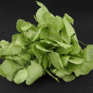 プリザーブドフラワー 材料 花材 HYDRAGEAアジサイ グリーン 小分け あじさい 紫陽花 solargift