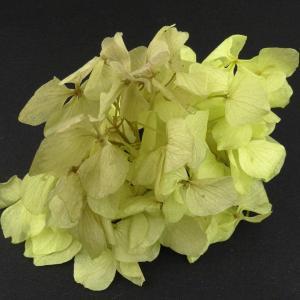 プリザーブドフラワー 材料 花材 HYDRAGEAアジサイ アッシュグリーン 小分け あじさい 紫陽花 solargift