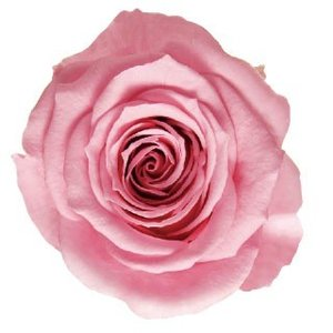 そらプリ プリザーブドフラワー バラ アイネスミニ9 マドレーヌピンク 小分け 1輪|solargift