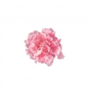 プリザーブドフラワー 花材 カーネーションミニ ベイビーピンク 小分け 1輪 プリマヴェーラ solargift